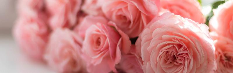 キャンセルポリシーのイメージ画像(ピンクの花束)