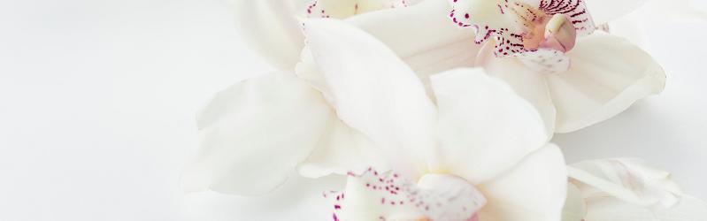 白い蘭のイメージ画像