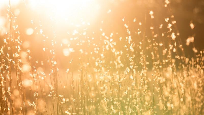 黄昏で光り輝いている画像