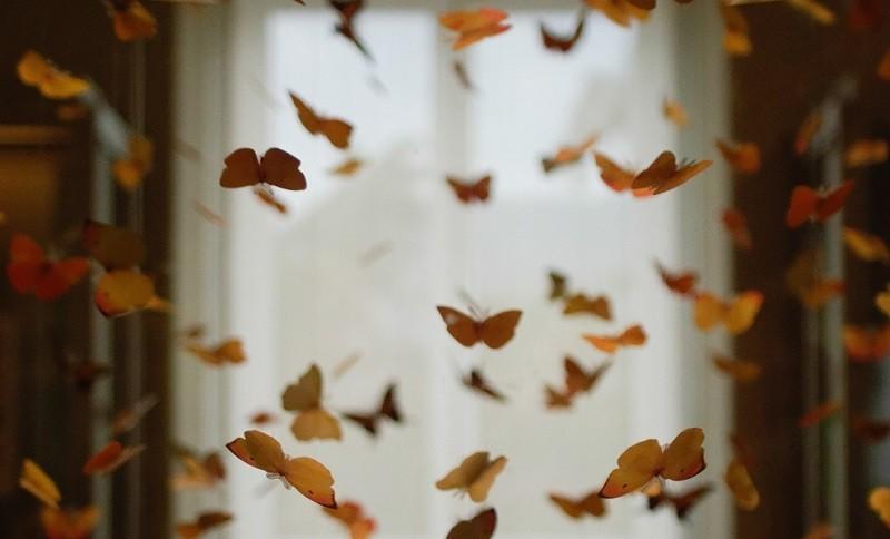 たくさんの蝶が舞っている画像