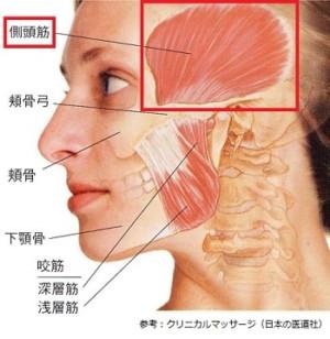 側頭筋の画像